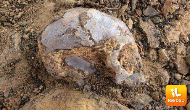 Il cranio ritrovato in Kenia, grande come un limone