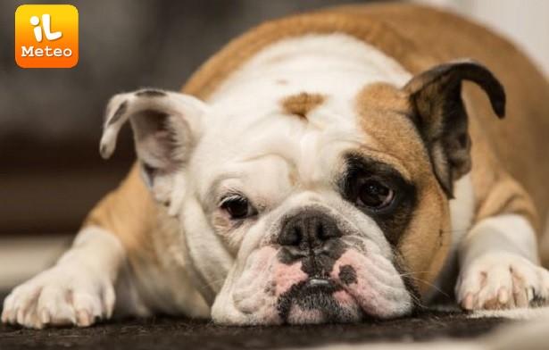 Cani E Gatti Ecco Chi Ha Più Neuroni Ilmeteoit