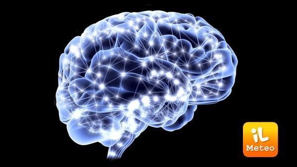 Il cervello umano non finisce di stupire