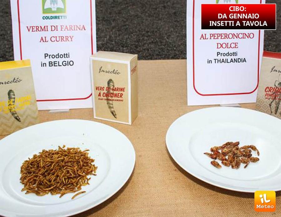 CIBO: da Gennaio insetti a tavola