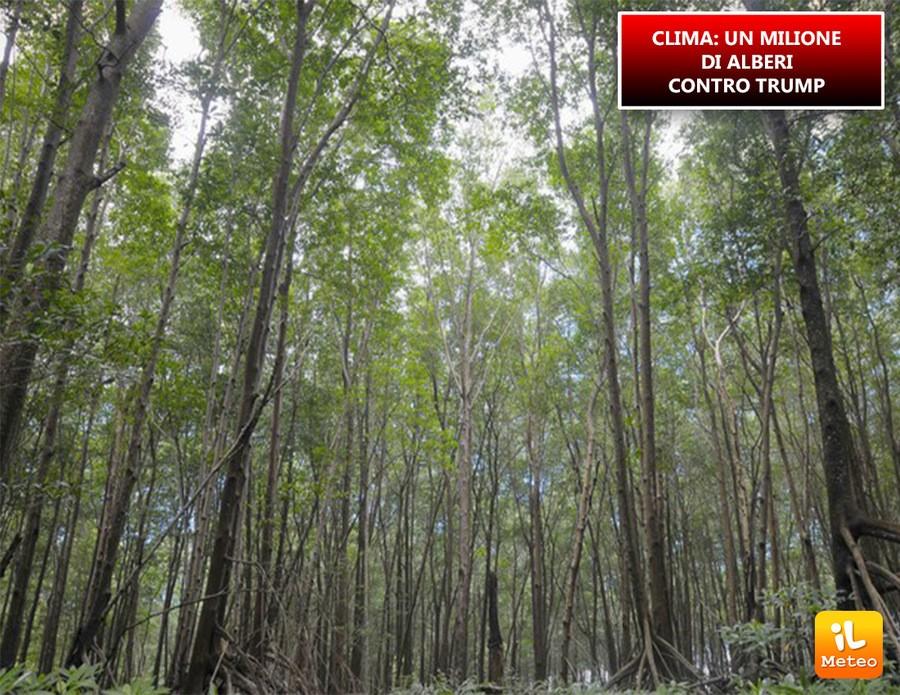 Piantare alberi contro la CO2