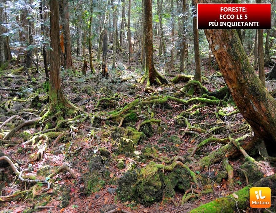 FORESTE: ecco le 5 con i segreti più inquietanti