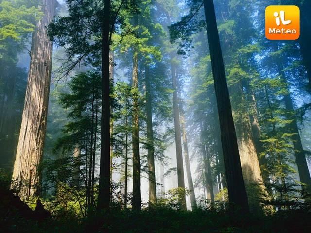 Aumento di anidride carbonica, la Terra si difende diventando più verde