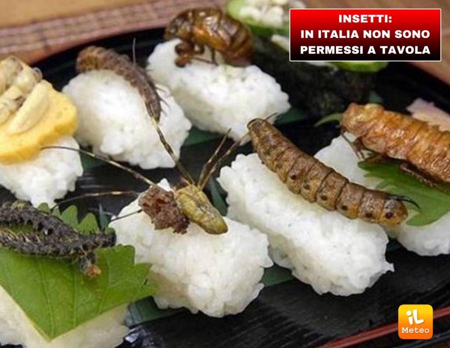 INSETTI: in Italia non sono permessi a tavola