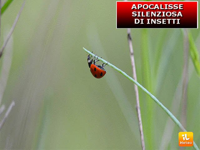Il numero di insetti è in forte diminuzione