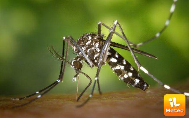 Mosquito day: un'insidia pericolosa per l'uomo con centinaia di migliaia di morti ogni anno