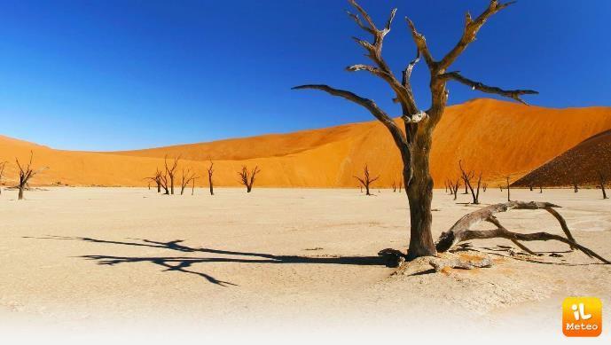 Il meraviglioso deserto della Namibia, con la sua caratteristica foresta cristallizzata