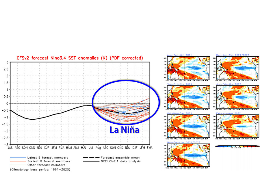 Anomalia della temperatura nell'Oceano Pacifico (inferiore a -0,5 °C): sta arrivando la niña