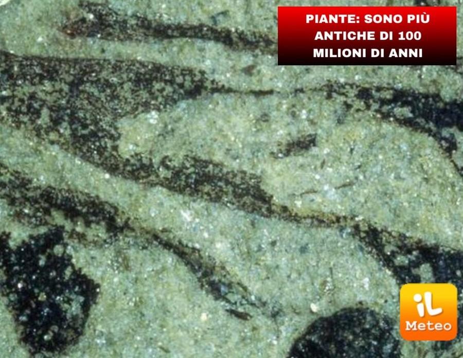 PIANTE: sono più antiche di 100 milioni di anni