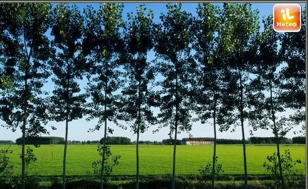 02775c34264e CLIMA  tendenze meteo per gli alberi del pianeta poco incoraggianti ...