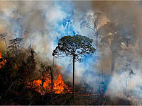 Meteo: AMAZZONIA in PERICOLO! Ecco in COSA si trasformerà la FORESTA PLUVIALE secondo uno STUDIO svedese