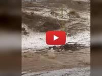 Meteo Cronaca DIRETTA VIDEO: ARABIA SAUDITA, DESERTO diventa di GHIACCIO dopo una GRANDINATA a TAIF. Le IMMAGINI
