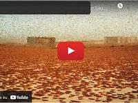 Meteo Cronaca VIDEO: ARABIA SAUDITA, un Esercito di MILIARDI di LOCUSTE invade il PAESE. Le IMMAGINI
