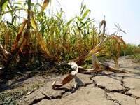 Meteo: CAMBIAMENTO CLIMATICO, una MINACCIA Anche per Agricoltura e Trasporti. Ecco Quali Sono i Rischi per l'Uomo