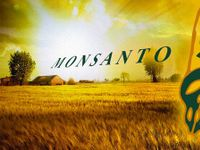 Monsanto sarebbe stata accusata di ecocidio