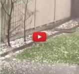 Meteo Cronaca DIRETTA: SIDNEY, pazzesca Grandinata si scatena con Furia sulla metropoli australiana. Il VIDEO