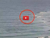 Meteo Cronaca VIDEO: AUSTRALIA, SQUALO BIANCO uccide un SURFISTA, non succedeva da 60 anni. Ecco le IMMAGINI