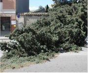Il MAESTRALE flagella la Sardegna: raffiche ad oltre 100 km/h!